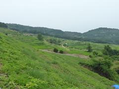 Rice terraces (Stop carbon pollution) Tags: honshuu japan okayamaken setouchiarttriennial teshima