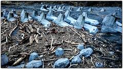 DSC_0726_S1 (Bearshu) Tags: natural disaster driftwood 河流 漂流木 颱風 風災 海