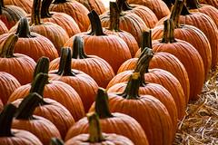 Perfect pumpkins. (MyImageJournal) Tags: fall pumpkins halloween pumpkinpatch orange festival