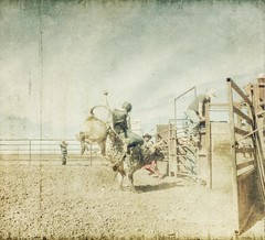 devil dance (jssteak) Tags: canon cowboy colorado glare afternoon grunge bull dirty hdr bennett bucking bullrider t1i