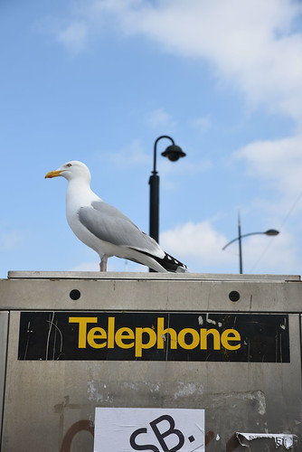 """Not A Telephone • <a style=""""font-size:0.8em;"""" href=""""http://www.flickr.com/photos/41894159895@N01/16721259459/"""" target=""""_blank"""">View on Flickr</a>"""