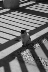 Palace Cat