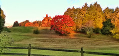LOOKING FOR LYDIA (Irene2727) Tags: autumn trees house nature colors fence landscape hill annapolis hauntedhouse lydiasrest