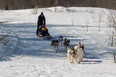 DSC03502_s (AndiP66) Tags: sony dscrx100ii dscrx100m2 rx100ii rx100m2 andreaspeters husky tour hundeschlitten schlittenhunde eskimo dog sled sledge oberwald wallis goms obergoms oberwallis winter schweiz suisse switzerland schnee snow mountains berge alps alpen obergomsvs valais