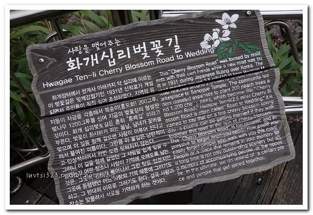 화개십리벚꽃길33