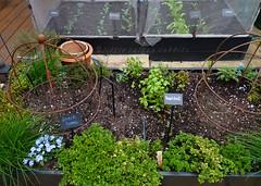 veg garden (littlecottonrabbits) Tags: vegetables garden spring gardening grow growing