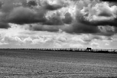 Horizon Horse (Jochem.Herremans) Tags: horse lines rain clouds dark countryside belgium horizon belgië be land farmer agriculture merchtem vlaamsgewest