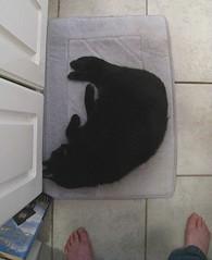 let sleeping cats lie? (muffett68 ) Tags: ansh scavenger3 sleepy