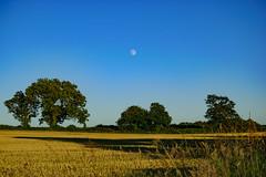 sunset moon (williams.stuart72) Tags: blue trees sunset sky moon green yellow nikon warm bluesky feild warmcolors d3300