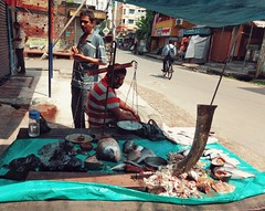 The Fish Seller (arkamitra lahiricolour) Tags: portrait people india fish colour indian streetphotography streetscene motorola balance kolkata calcutta shopkeeper westbengal fishseller g4plus