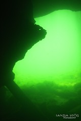IMG_5974 (2) (SantaFeSandy) Tags: giant snapper turtle cave diving sinks lafayette blue springs state park sandrakosterphotography sandrakosterphotographycom sandykoster sandy sandra santafesandysandrakosterphotographycom sandrakoster algae green sink stevens 1 snake