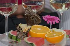 Butterfly party (Radijsje) Tags: butterfly fruit glass flower inside orange theemetvlinders knokkeheist
