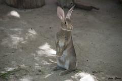 Me ha parecido ver un lindo conejito... (Jotha Garcia) Tags: madrid summer rabbit animal zoo conejo july julio verano 2016 nikond3200 jothagarcia