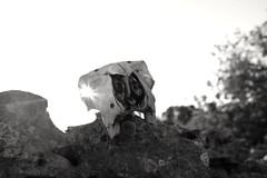 Silencio (lapsus.cream) Tags: calavera skull black white silence silencio naturaleza muerte death