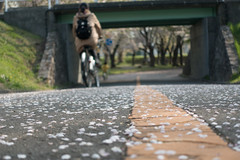 "sakura velo (HAKUDO is busy (""_"")) Tags: sakura sapporo japan japon zeiss sony street bycles vélo rx100 rx100iii hokkaido"