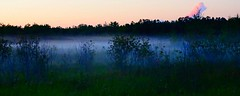 Rising fog on a Hot & Humid Day in La Coulee, Manitoba (ezigarlick) Tags: rising fog dew hot summer humid day lacoulee manitoba dawsontrail dawsonroad rmofsteanne steannerm weather field trees