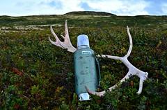 Good Ol` Stanley...... (KvikneFoto) Tags: stanley thermos termos landskap natur norge hedmark kvikne