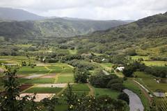 the taro fields of hanalei valley (1600 Squirrels) Tags: 1600squirrels photo 5dii lenstagged canon24105f4 landscape northshore kauai kauaicounty hawaii usa argirculture field taro hanalei valley river kalo