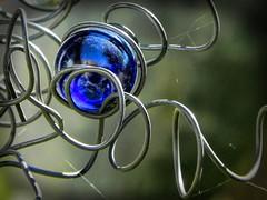 Twist (clarkcg photography) Tags: macro marble wire twist wrap intertwine curls yardartcatchlight blue macrowednesday7dwf