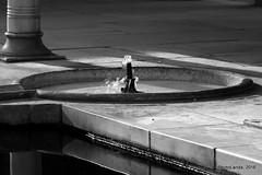 Fuente (Landahlauts) Tags: fujifujinonxf55200mmf3548rlmois fujifilmxpro1 alhambradegranada generalife andalucia andalusia andalusien granada reinodegranada reinonazari palacio alhambra nazarita توريق غرناطة alandalus heritage herencia منطقةالأندلسذاتيةالحك europa europe андалусия ανδαλουσία اندلس 安達魯西亞 ანდალუსია アンダルシア州 안달루시아지방 แคว้นอันดาลูเซีย андалузија אנדלוסיה andaluzio andaluzia أندلوسيا andaluz الأندلس andalouzia andalusie andalusiya unescoworldheritagesite unesco patrimoniodelahumanidad アンダルシア 安达卢西亚 安達盧西亞 andalucía worldheritagesite moriscos andaluzja グラナダ منطقةحكمذاتيالأندلس منطقةالأندلسذاتيةالحكم আন্দালুসিয়া 安達魯西亞自治區 κοιμητήριον андалуси андалусія andalousie palaciodelpartal