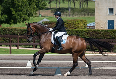 160911_NSW_D_Champs_Medium_5233.jpg (FranzVenhaus) Tags: championships athletes siec dressage newsouthwales australia equestrian riders horses performance event competition nsw sydney aus