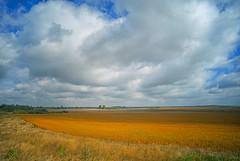 vast (rgbshot72) Tags: autumn yellow trees field sky nature travel blue sun sunlight light clouds grass skyline village outdoors vast pics nikon d800e