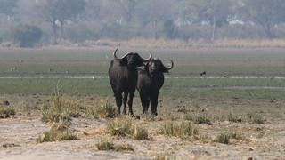 Namibia Dangerous Game Safari - Caprivi Strip 57