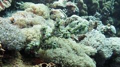 G16_160918 00112 2 (puikincz) Tags: bali nusapendia underwater diving secretgarden