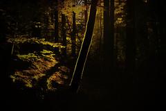 Moss On Log In Forrest (PiConsti) Tags: piconsti light mood forrest tree log moss moos wald baum stamm baumstamm licht warm herbst fall orange nature wlder schwarzwald hauingen germany deutschland