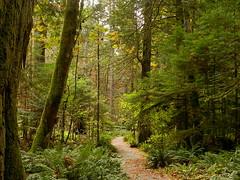 Trail of the Cedars (Ramona H) Tags: cedar trees trail newhalem seattlecitylight skagit skagitriver pathnorthcascades