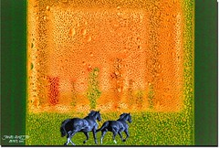 PINC GREEN & BLACK (jawadn_99) Tags: pink horses favorite black green art glass rain animal fauna poster photography fantastic flora flickr angle vivid scout explore raindrops shining raising galope supershot stalion abigfave 57faves ringexcellence blinkagain