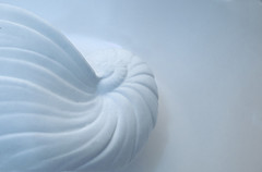Abstract pastel blue shell swirls on pale blue background (Lori Greig) Tags: blue sea abstract spiral pastel curves dream shell peaceful calm pale swirls shape left babyblue onblue bluebackground adspace lorigreig