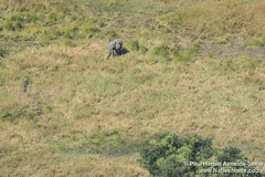 An Elephant Sighting While Flying Over The Okavango Delta, Botswana