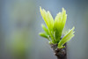 The Force of Spring (Fe 108Aums) Tags: love water leaves leaf spring force walk air enjoy simplicity mysterious shoots breathe powerful gratitude sprout simplelife marcusaurelius simplepleasures fecund johnburroughs presentmoment michaelgarofalo sacredordinary