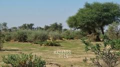 #روضة #خريم #hdr #colorful #nature #green #trees #plant #شجر #نبات #فيضة #بر #كشته #photo  #البراري #الرياض #رماح #ksa #saudiArabia #السعودية #عرب_فوتو #nature #landscape #panorama (photography AbdullahAlSaeed) Tags: trees plant green nature landscape photo colorful saudiarabia hdr بر كشته ksa السعودية الرياض شجر نبات روضة خريم البراري فيضة رماح عربفوتو
