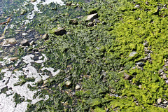 Green is Beautiful (Elisabeth Rose Astwood) Tags: ocean summer macro reflection green nature water sunshine island coast tide bubbles ripples lowtide algae westcoast gambier macrodreams