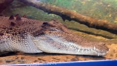 DSC_8271 (slamto) Tags: australia sydneyaquarium sydneysealifeaquarium