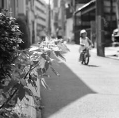 160626_ZenzaBronicaS2_004 (Matsui Hiroyuki) Tags: zenzabronicas2 zenzanon150mmf35 fujifilmneopan100acros epsongtx8203200dpi