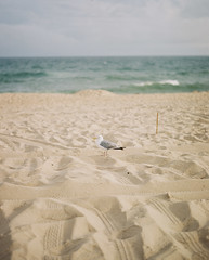 Seagull (kenneth.pelczar) Tags: soul living photography fun america usa newyork longisland green summer color negative 160asa 105mm 2016 camera film colors grain ishootfilm iso160 kodakportra 160 kodak portra fujifilm analogue 6x7 pentax asahi