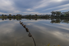 Winter reflections (Ian@NZFlickr) Tags: flower reflections head lagoon east nz otago flax waikouaiti hawksbury