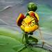 Yellow+pond-lily+-+N%C3%A9nuphar+%C3%A0+fleur+panach%C3%A9e