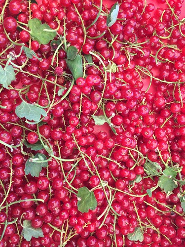 Red White & Black Currants Jul 22, 2016 (4)