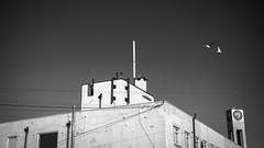 Dockside Studios and Clocktower (pixelhut) Tags: bristol uk england southwest city urban harbourside harbour floatingharbour cumberlandbasin avon port morning seagulls spikeisland blackandwhite clocktower