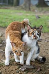 160728 - Loving (y_leong23) Tags: cat dlux