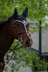 Rolex2 (NRJWphotography) Tags: horse brownhorse bayhorse rolex rolex2016 horseheadshot horsephotography equestrian lexington kentucky