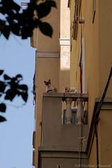 Barcelona.Catalonia (Natali Antonovich) Tags: barcelona sunnybarcelona architecture balcony cat animal catalonia spain