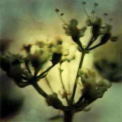 Macro (rvcroffi) Tags: plant planta sombre dark nature sombra shadow natureza flores flower mextures macro close