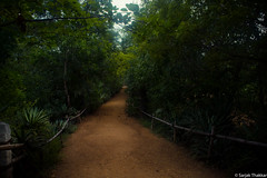 A path in the woods (SarjakThakkar) Tags: nature natural woods patj path dust trees forest beautiful infinity immortal artistic awesome