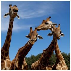 Boys Band (Pascal.M (bong.13)) Tags: la barben zoo animaux provence france bouchesdurhone sony rx100
