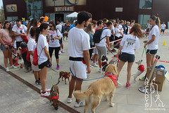 """Can-rerra Popular 2016 - Arcadys.org Bioparc Valencia • <a style=""""font-size:0.8em;"""" href=""""http://www.flickr.com/photos/145784091@N07/30226333636/"""" target=""""_blank"""">View on Flickr</a>"""